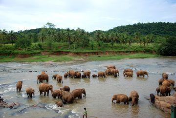 Koupání slonů ze sirotčince