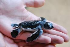 Želvička na dlani - centrum na záchranu želv
