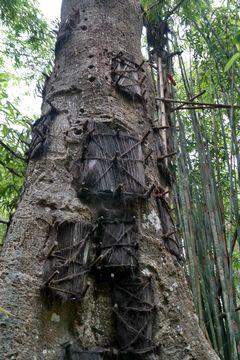 Pohřebištěm pro malé děti je vydlabaný otvor ve stromě