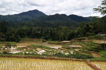 Malebná krajina Tana Toraja