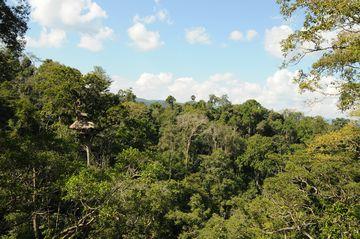 V korunách pralesa, rezervace Bokeo