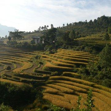 Terasovitá rýžoviště
