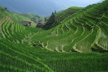 Zelené rýžové terasy Dračí hřbet