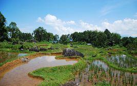 Rýžová pole v horách, Tana Toraja