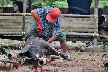 Zvířecí oběť