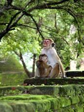 Samice makaka s mládětem