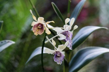 Singapurská orchidejová zahrada