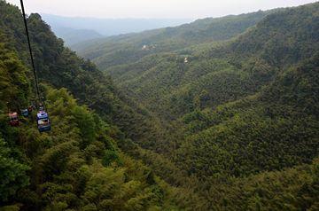 Bambusové moře z ptačí perspektivy